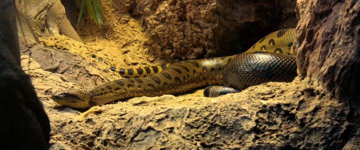 Mujer dormía junto a una serpiente y por poco muere debido a esto