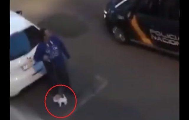 Mediante toque se queda, este hombre sacó a pasear a su perro de peluche