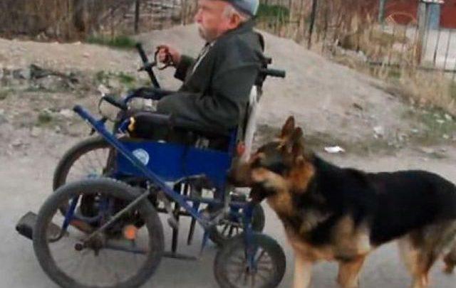 Anciano en silla de ruedas es ayudado por su perro (video)