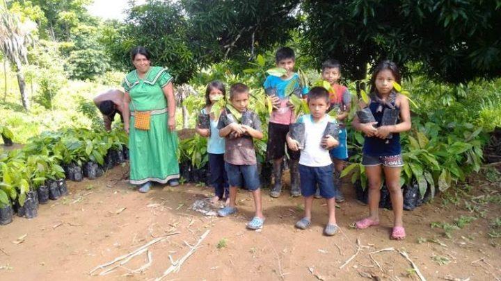 Indígenas del sur del país reactivan su economía a partir de Cacao