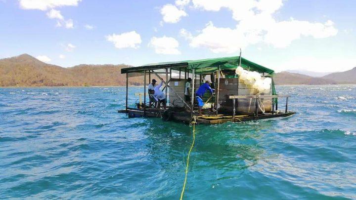 Centro de acopio agrega valor a la producción pesquera de 300 familias de La Cruz