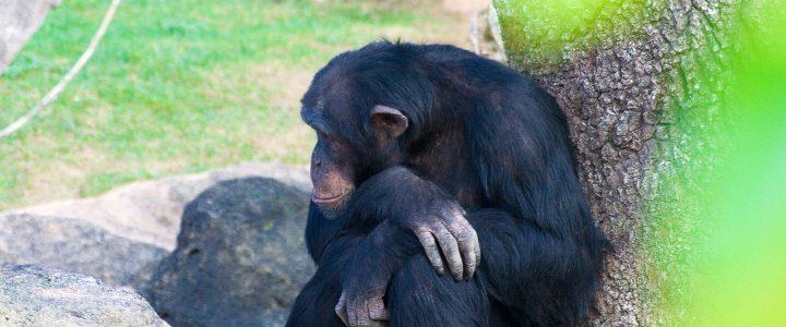 Fue lanzado el espeluznante tráiler de 'El planeta de los simios: la guerra'